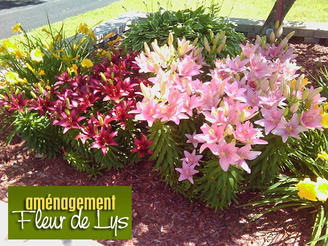 Aménagement Fleur De Lys   Paysagiste